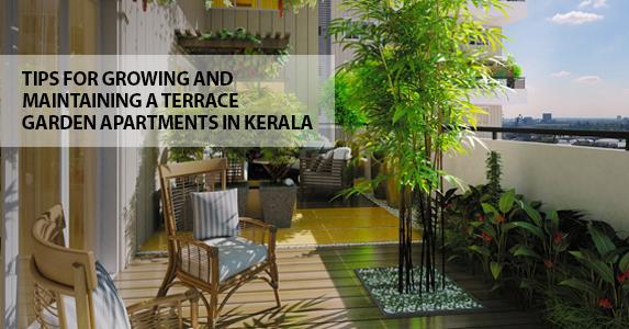 Terrace Garden Ideas For Apartments In Kerala : Tips ...