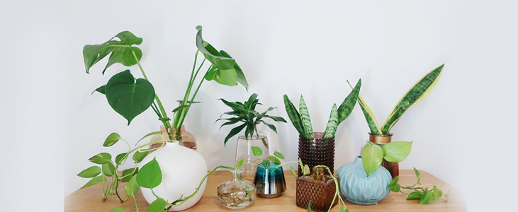 A-beginners-guide-to-set-up-indoor-plants-in-Kerala.